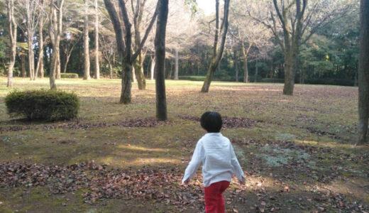 秋の桜山に行ってきた