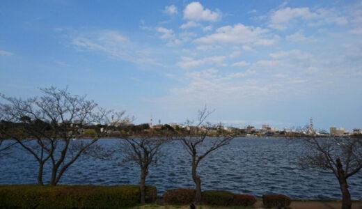 千波湖と鳥の写真を撮ってきました