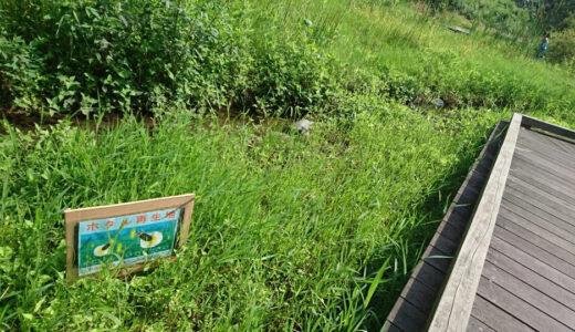 夏の逆川緑地を撮影してきた