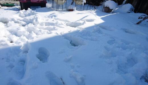 雪かきと雪だるま