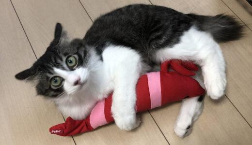 Petioの【けりぐるみ】を買ったら猫の食いつきがヤバかった。